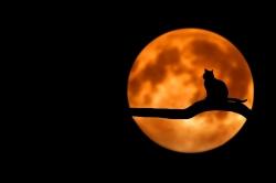 'Cats': Soundtrack erscheint heute